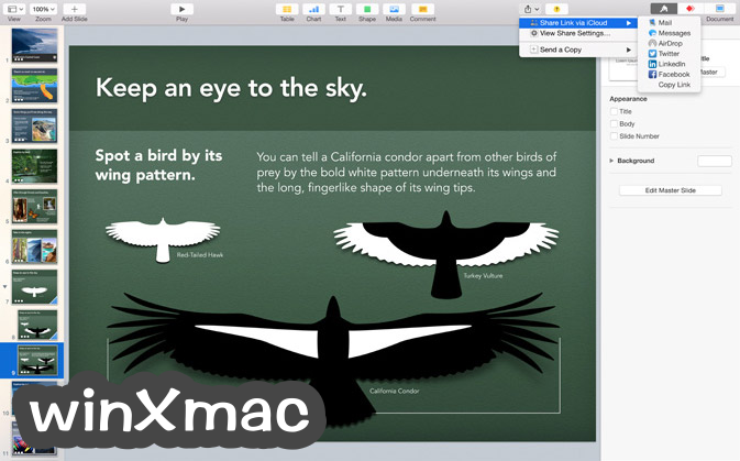 Apple Keynote for Mac Screenshot 3